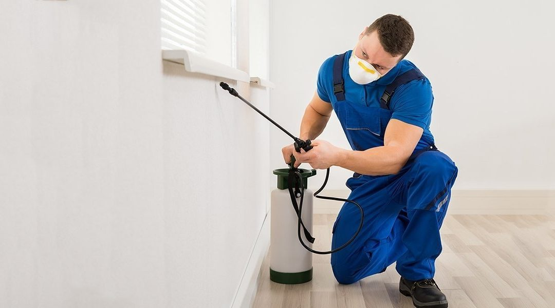 Top Reasons To Call a Professional Pest Control Company – Danny And Company