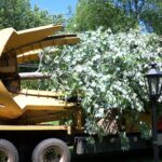 Your Basic Guide To Tree Relocation & Moving Companies!